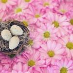 文鳥は何歳から、何歳までできるの?産卵と水浴び!