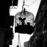 文鳥の雛がバタバタと鳥かごの中で暴れる!意味とは?