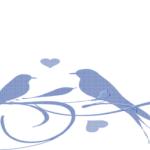 恋の季節に見られること!尻尾を振るのは、文鳥のオスorメス?