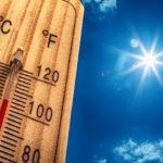 文鳥の足!暑さに弱いって本当なの?対策は?