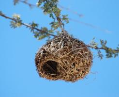文鳥 ツボ巣 いらない 壊す サイズ