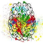 動物の脳の大きさと知能の良さ!相関性はあるの?文鳥は?