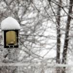 文鳥は冬の寒さが平気なの?何か寒さ対策は必要ないの?