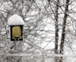 文鳥 冬 寒さ 対策