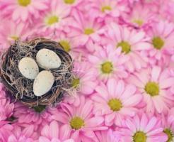 文鳥 産卵 水浴び 兆候 年齢 何歳まで